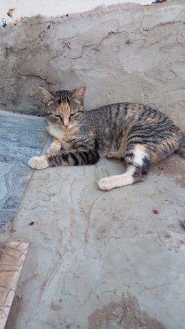 Doação de lindas gatas já castradas - Foto 5