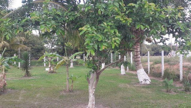 Vendo Terreno (Mini Sitio) em Itaguaí/RJ - Foto 15