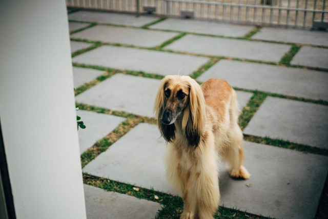 Pet Shop Seminário - Foto 2