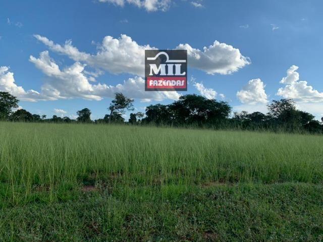 Fazenda dupla apitidão 200 Alqueires ( 968 hectares ) Itajá-GO - Foto 10