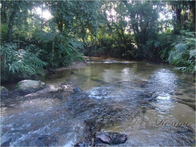 Linda Área Rural com 100 alqueires em Antonina/Paraná - Foto 5