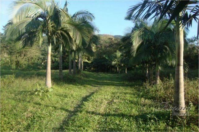 Linda Área Rural com 100 alqueires em Antonina/Paraná - Foto 2