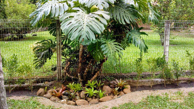 Paisagismo e manutenção de jardins - Foto 5