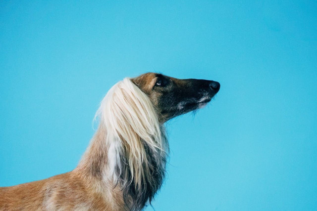 Pet Shop Seminário - Foto 3
