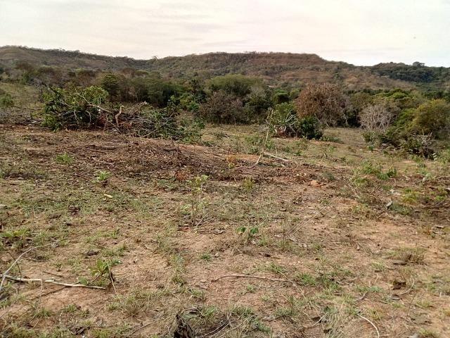 Venda de Fazenda, 650 hectares, Guiratinga - MT - Foto 8