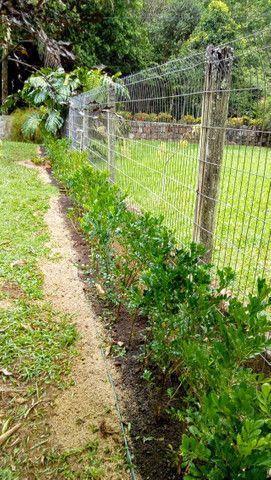 Paisagismo e manutenção de jardins - Foto 6