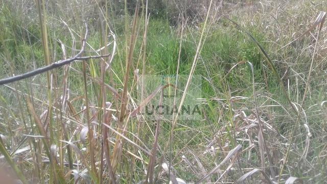 Sítio em Chã Grande com 9,2 hectare (Cód.: ho857) - Foto 7