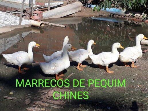 Filhotes 10 uni.por 100 reais - Foto 2