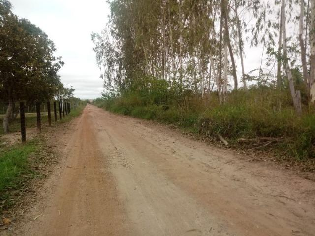 Vendo uma área de 6 hectares distrito, apos o hotel pantanal - Foto 2