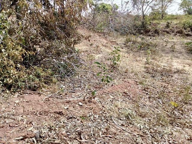Venda de Fazenda, 650 hectares, Guiratinga - MT - Foto 7
