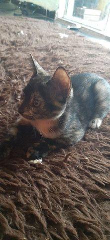 Doação responsável (gatinha mesclada - Foto 2