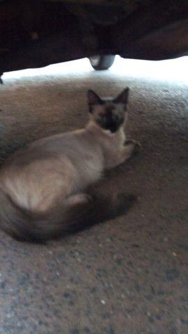 Doação de lindas gatas já castradas - Foto 2
