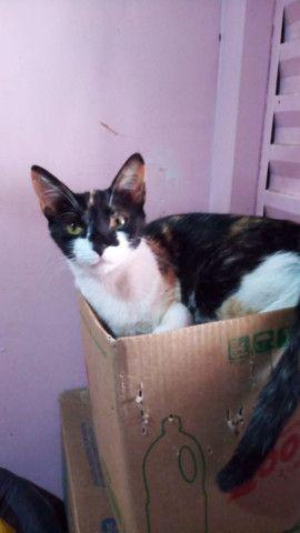 Doação de lindas gatas já castradas - Foto 4