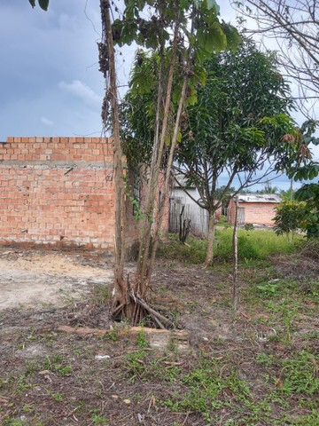 2 terrenos em Benevides - Foto 4