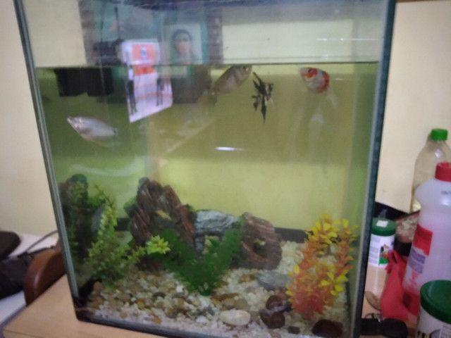 Vendo  aquário  - Foto 3