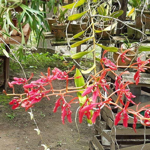 Orquídeas  - Foto 5