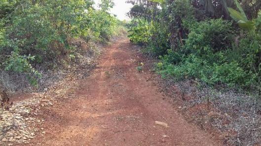 Chácara (4 ha), 25 km de Altamira, com nascentes, tanques, cacau da Bahia, Terra Roxa