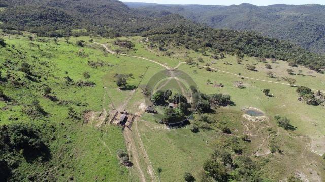 Fazenda 380 ha, na região de são vicente - Foto 4