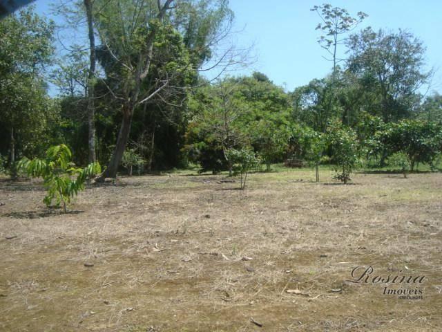 Òtimos terrenos para investimento em morretes - Foto 17