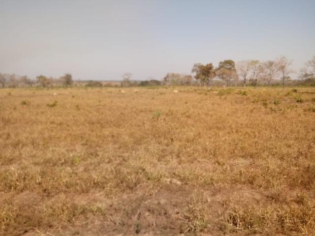 Fazenda em Livramento com piscina, muito pasto, represas e lago - Foto 12