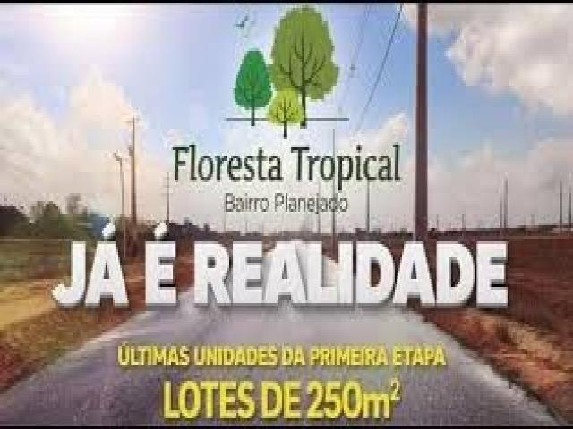 Terreno para Venda floresta tropical - Foto 12