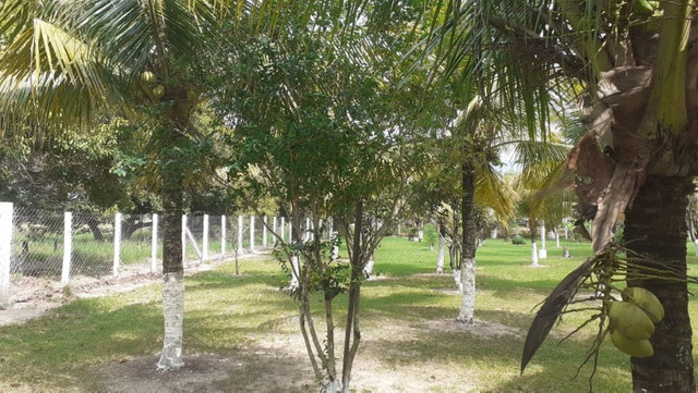 Vendo Terreno (Mini Sitio) em Itaguaí/RJ - Foto 7