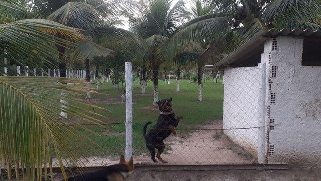 Vendo Terreno (Mini Sitio) em Itaguaí/RJ - Foto 3