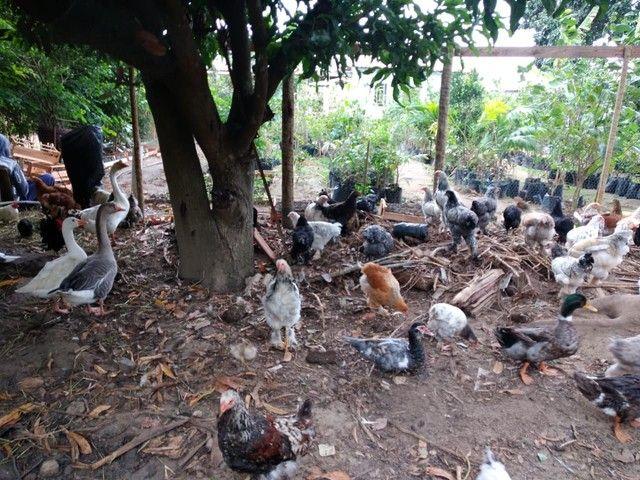 Promoção galinha *18 ZAP  - Foto 4