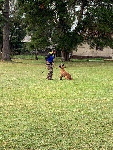 Adestramentos para cães  - Foto 2