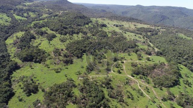 Fazenda 380 ha, na região de são vicente - Foto 2