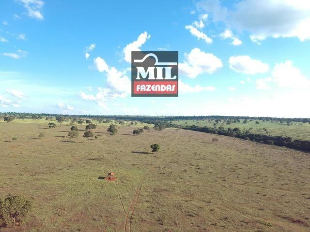 Fazenda dupla apitidão 200 Alqueires ( 968 hectares ) Itajá-GO - Foto 13