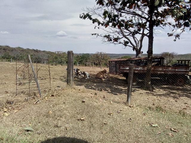 Venda de Fazenda, 650 hectares, Guiratinga - MT - Foto 3