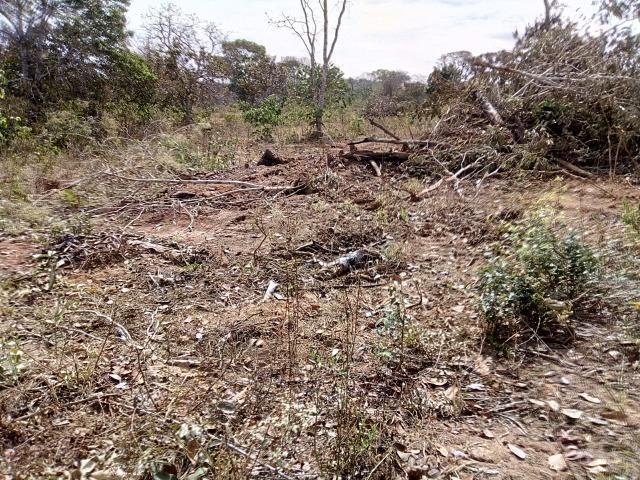 Venda de Fazenda, 650 hectares, Guiratinga - MT - Foto 10