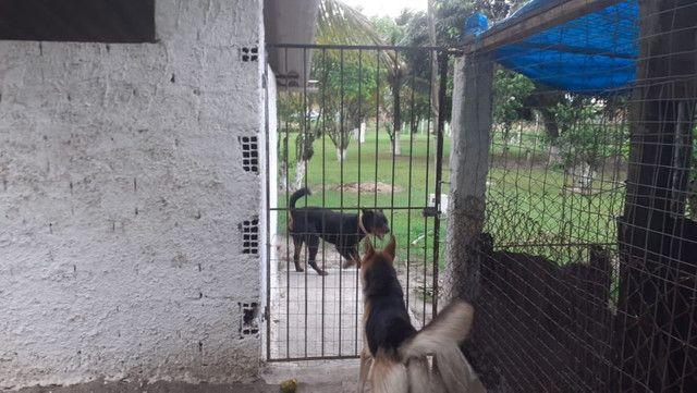 Vendo Terreno (Mini Sitio) em Itaguaí/RJ