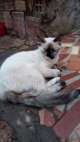 Doação de lindas gatas já castradas