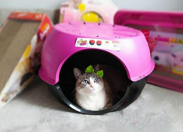 Toca caminha Para Gatos Furacão Pet