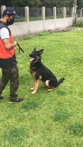 Adestramentos para cães  - Foto 5