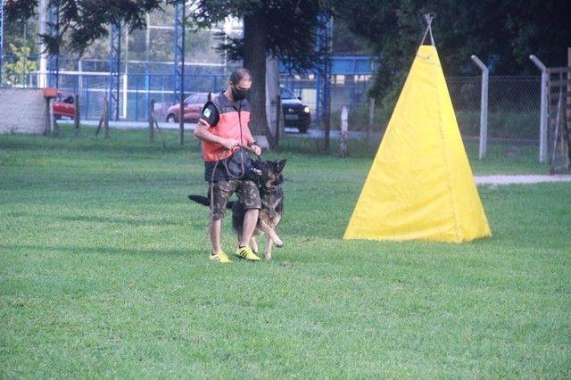 Adestramentos para cães  - Foto 4