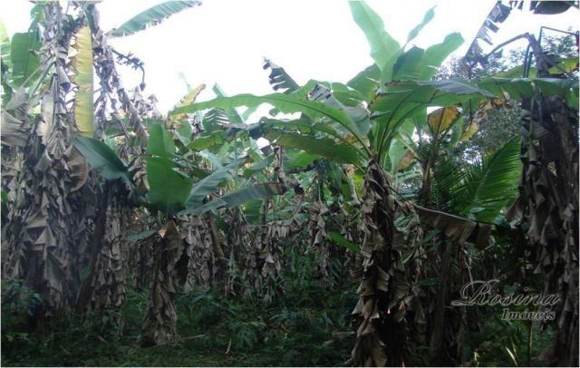 Linda Área Rural com 100 alqueires em Antonina/Paraná - Foto 4