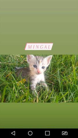 Doação de gatinhas - Foto 4
