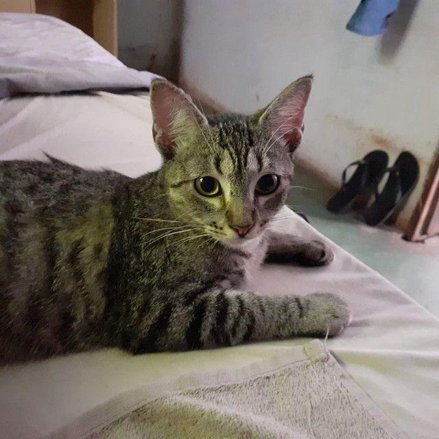 Gatinhos para adoção responsável  - Foto 6