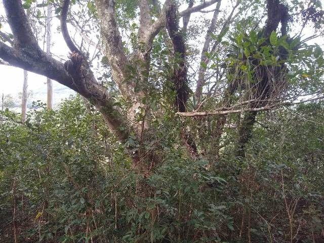Área de terras com eucalipto, bom acesso, Fraga Caraá - Foto 2