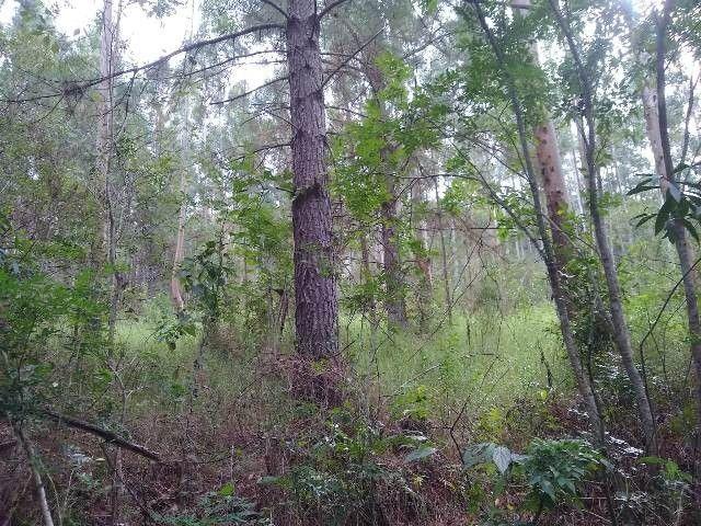 Área de terras com eucalipto, bom acesso, Fraga Caraá - Foto 3