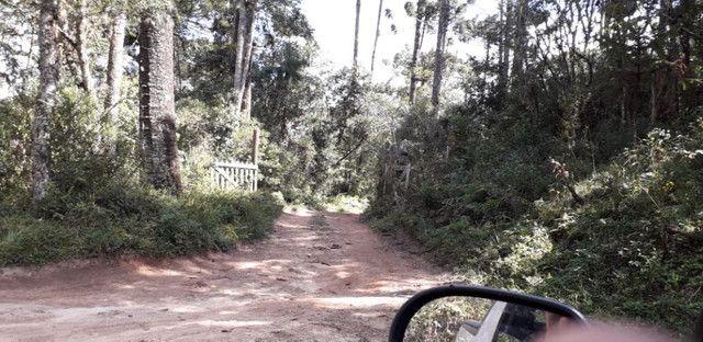 Maravilhoso Sítio Com 16 Hectares, Vila Maria, Em Piranguçu/Mg, A 6 Km De Campos Do Jordão - Foto 3