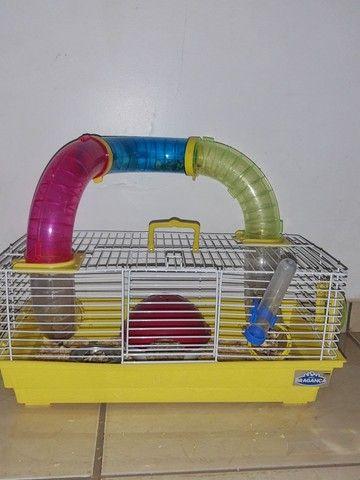 Hamster com casinha - Foto 2