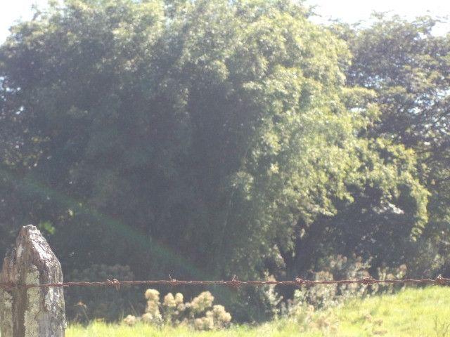 Otimo sítio para criação de gado e moradia - Foto 10