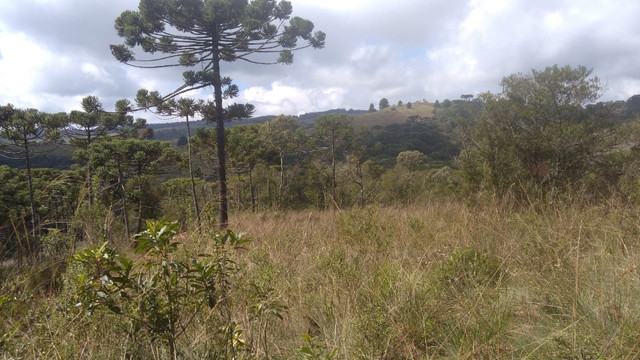 Maravilhoso Sítio Com 16 Hectares, Vila Maria, Em Piranguçu/Mg, A 6 Km De Campos Do Jordão