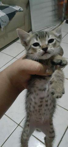 Doação 3 gatinhas - Foto 2