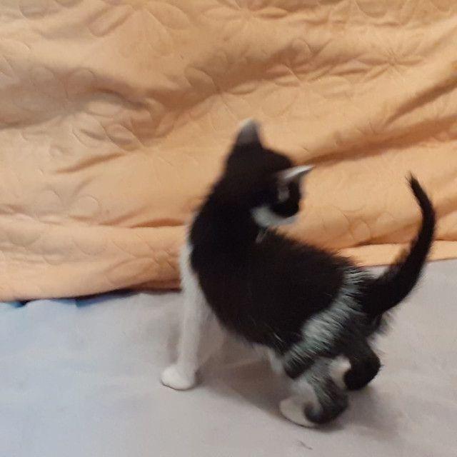 Gatinhos para adoção responsável  - Foto 3