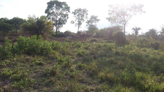 Terreno à venda, 18 alqueires por R$ 540.000,00 - Vila Mandi/PA - Foto 4